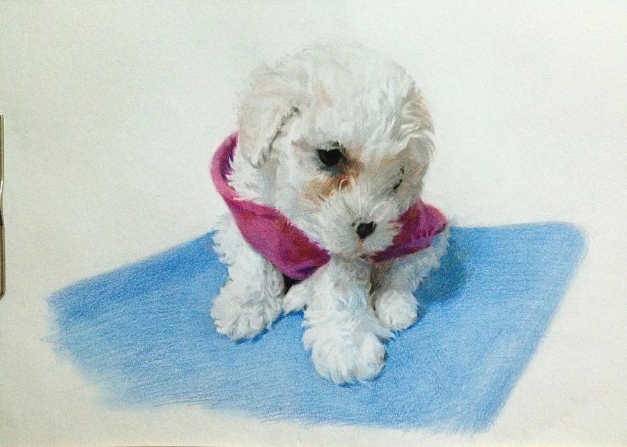 彩铅手绘泰迪图片