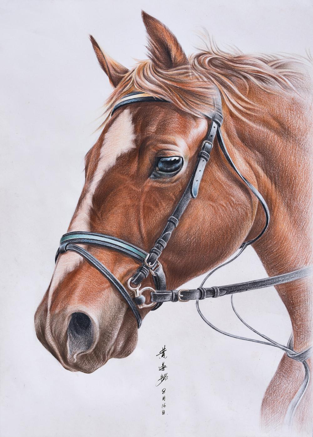 手绘彩铅马