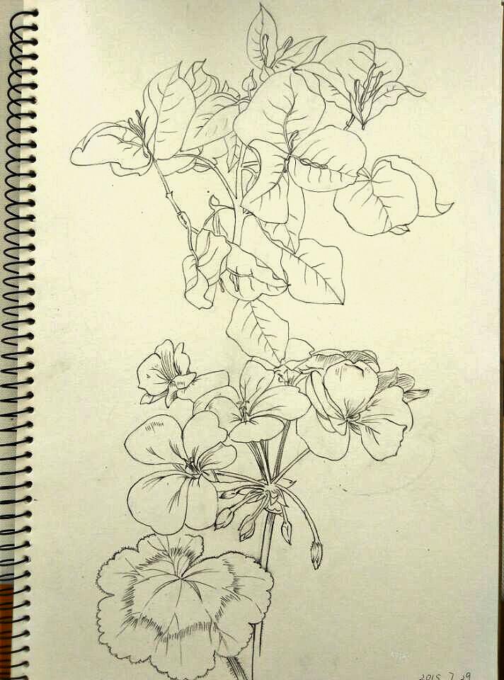 花卉线描|绘画习作|插画|颜嫣
