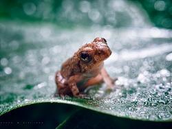 《雨后遇蛙》