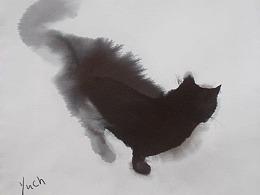 第二百六十九期  猫