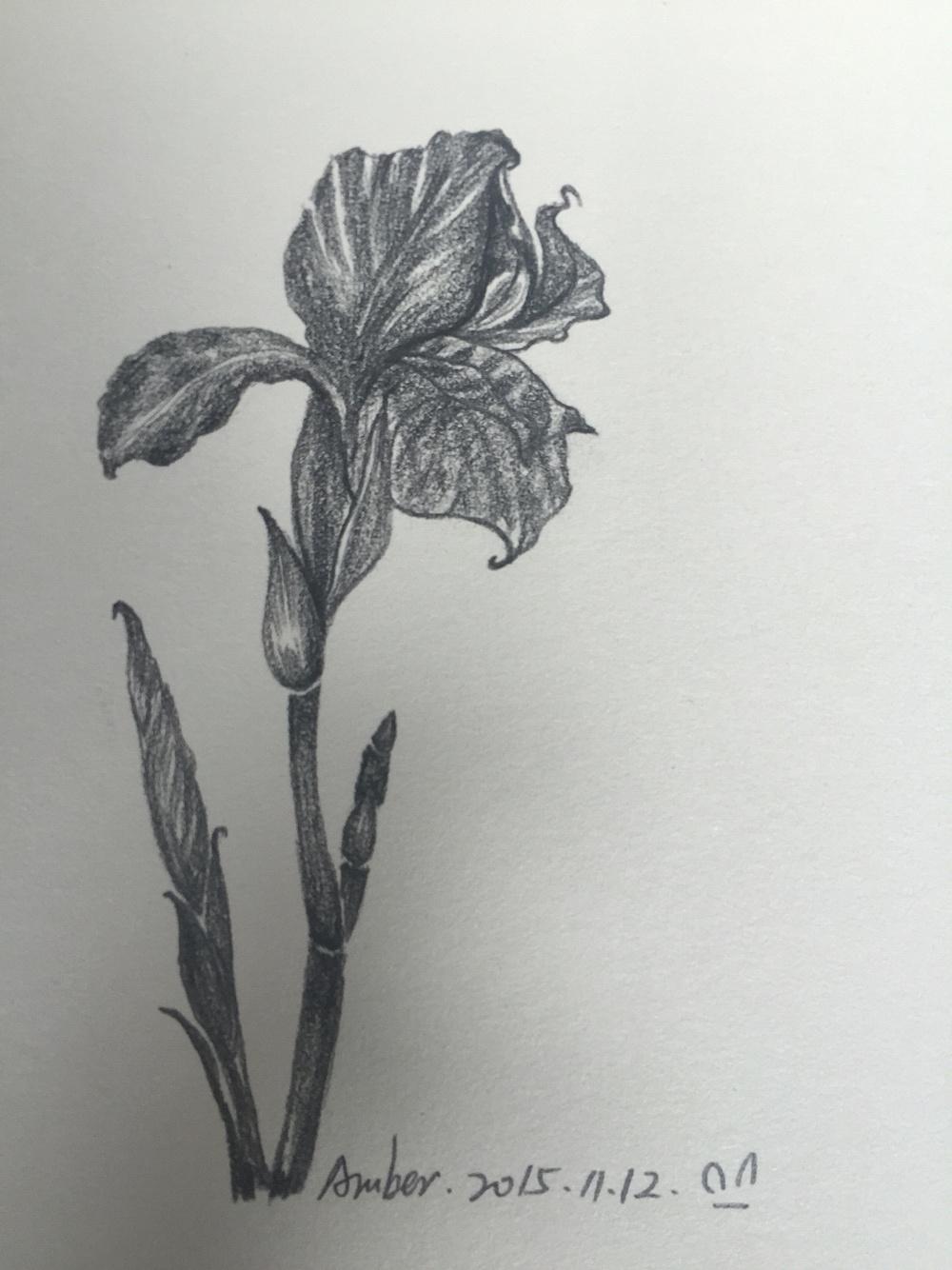 临摹素描 花卉图片