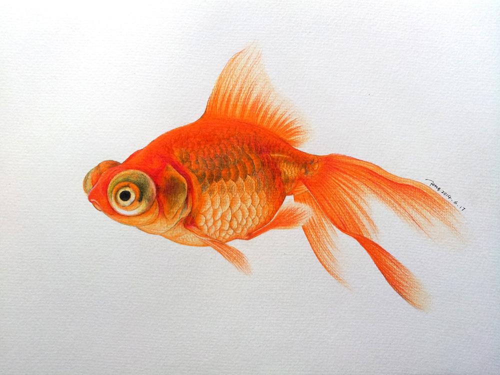 彩铅-金鱼