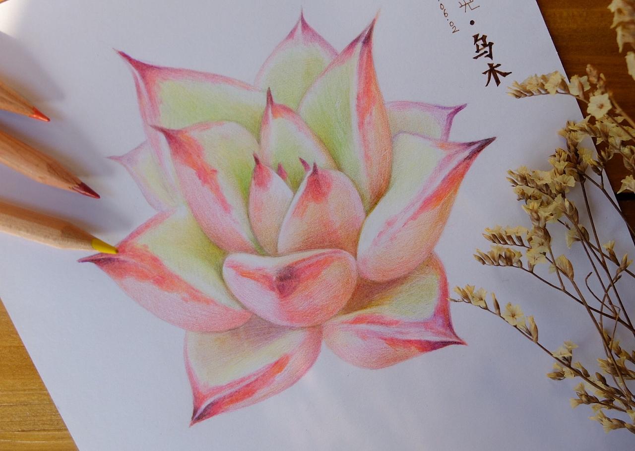 彩铅手绘多肉植物/乌木