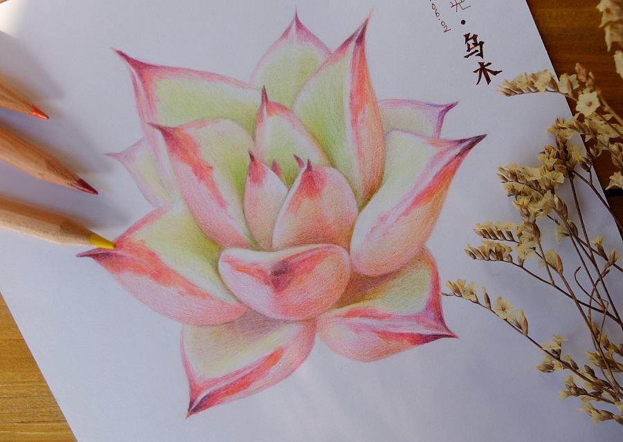 彩铅手绘多肉植物/乌木|绘画习作|插画|魂儿