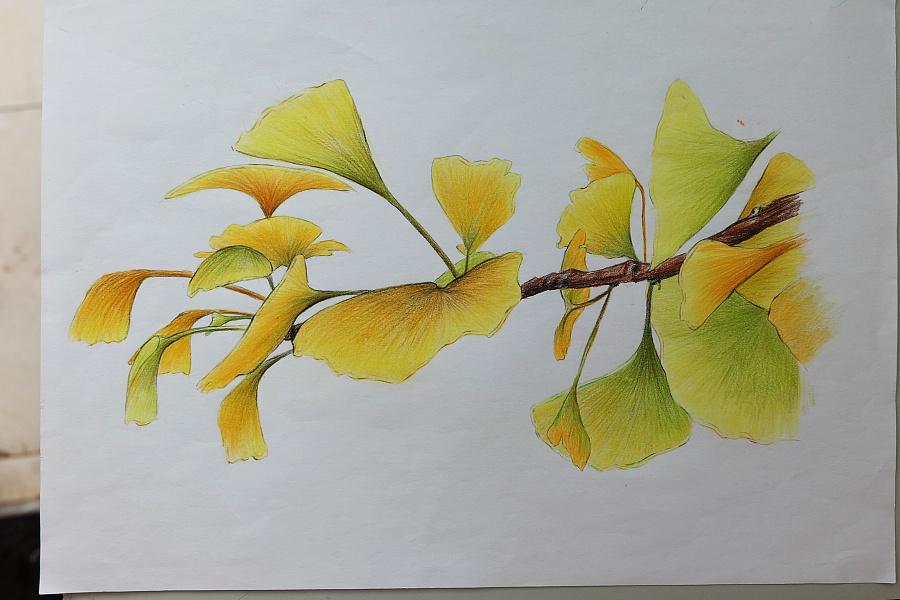 彩铅手绘|绘画习作|插画|豆芽xx