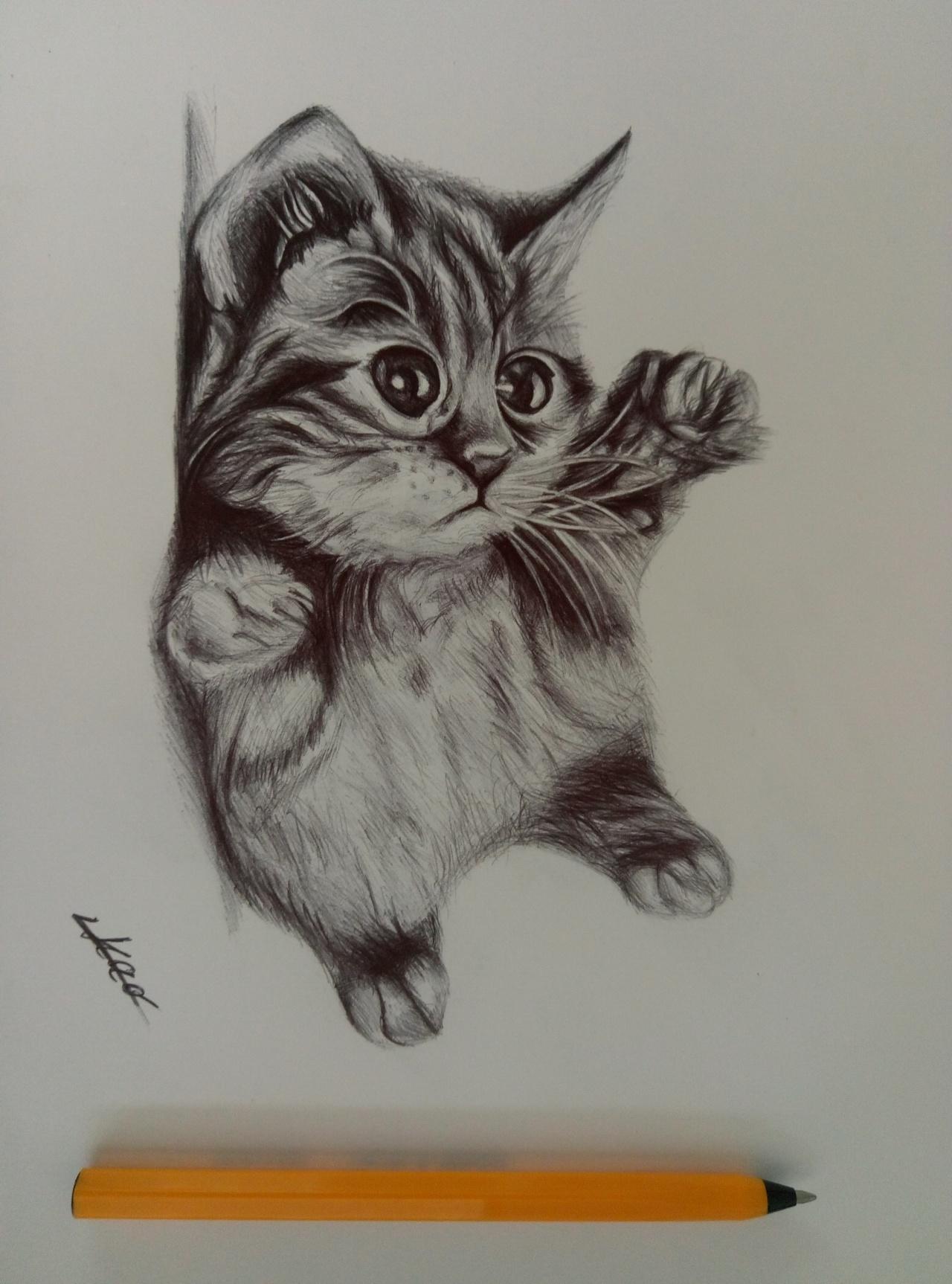 圆珠笔画 小猫