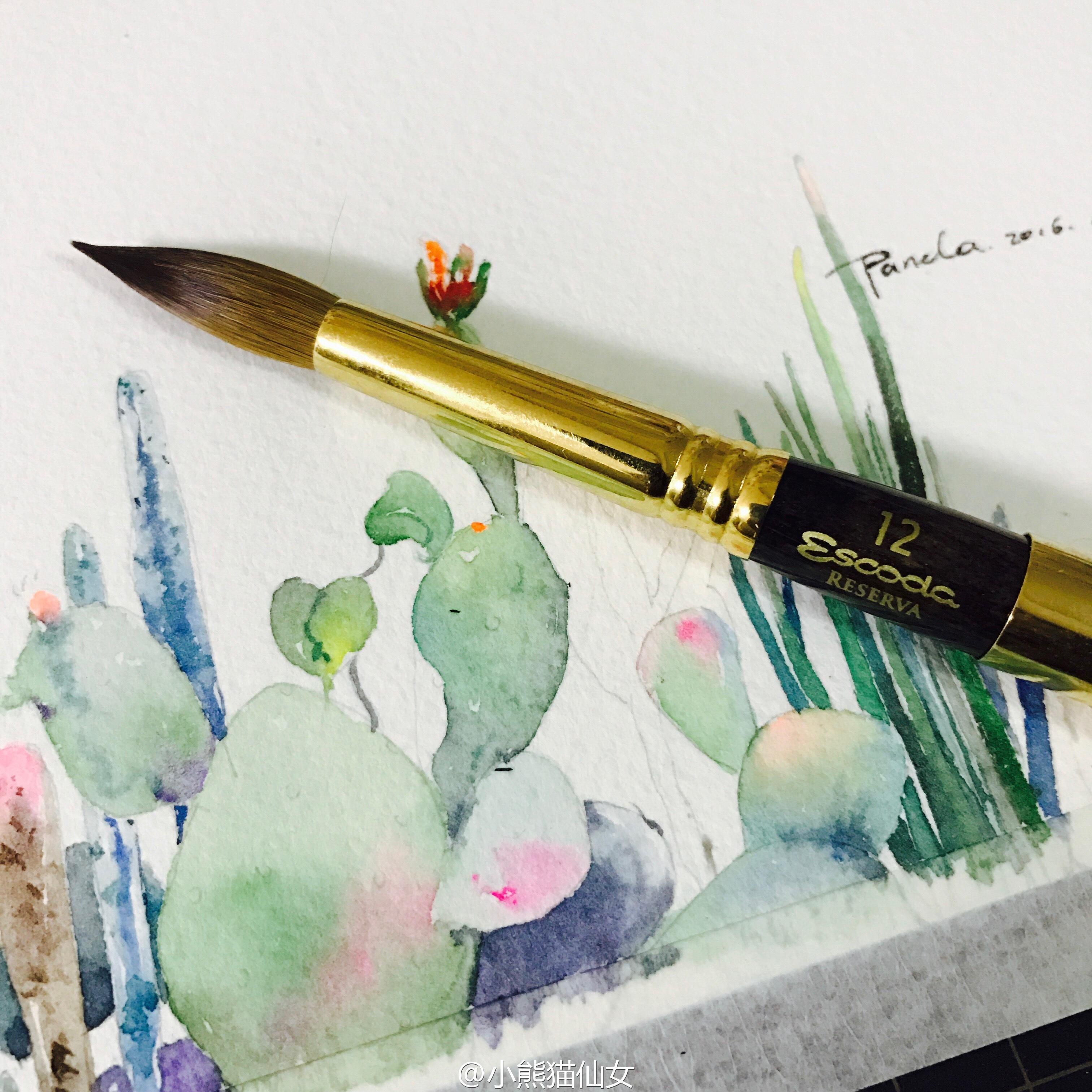 【小熊猫】水彩植物仙人掌手绘教程水彩风景旅行水彩教程