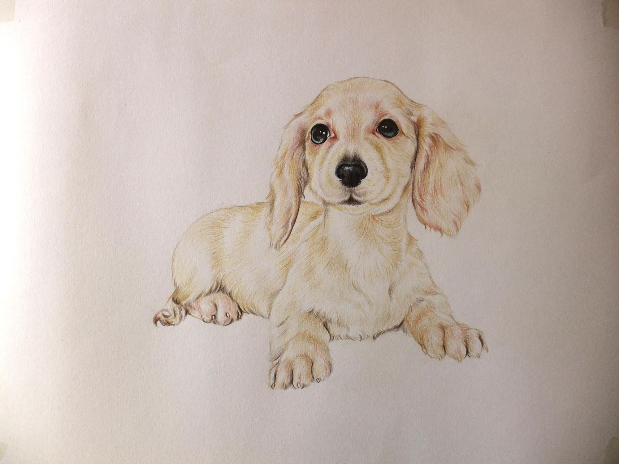 色女和公狗�9��yl#�+_色铅笔的宠物萌绘里面的萌狗