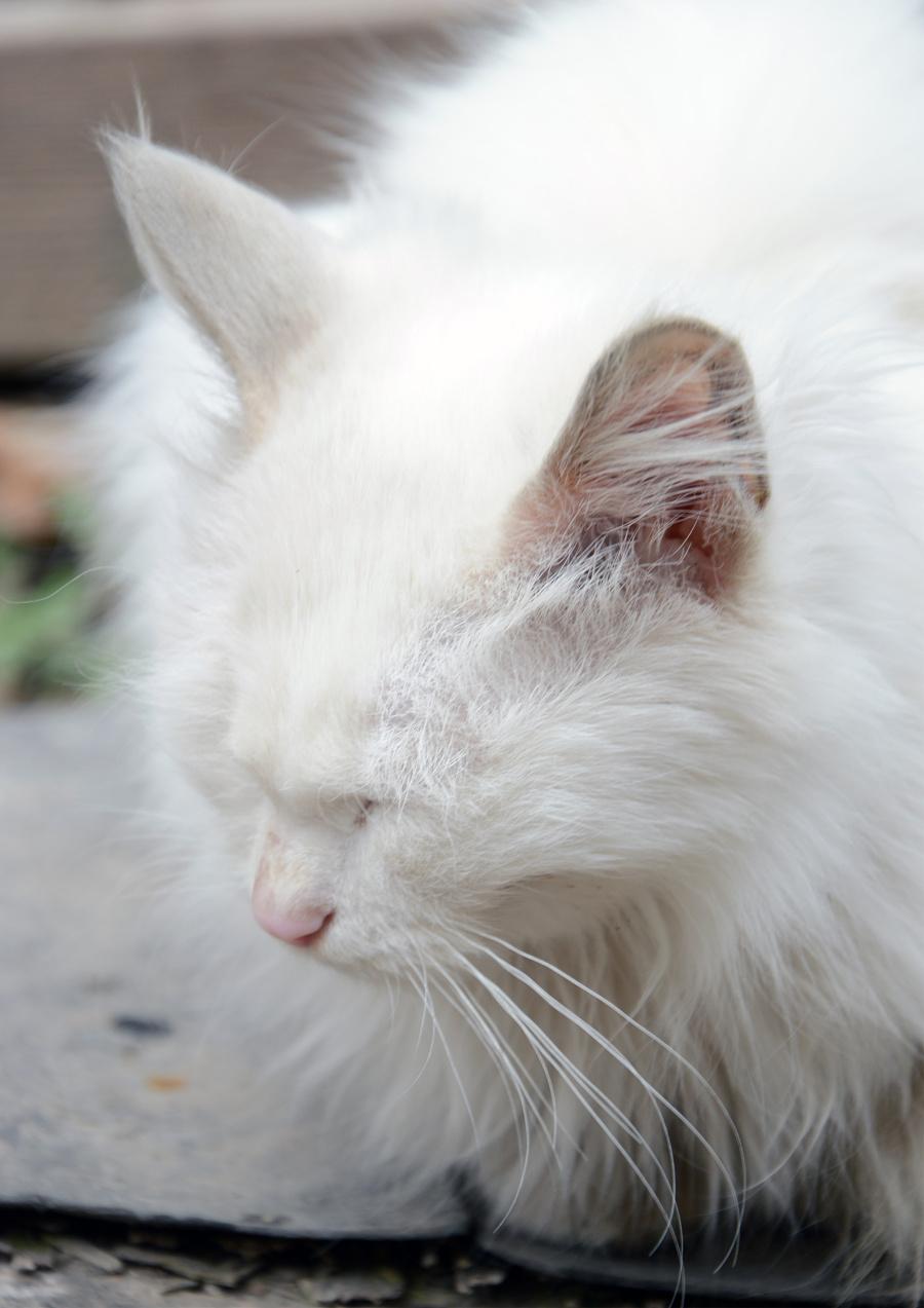 猫系列|宠物/动物|摄影|杨晓峰