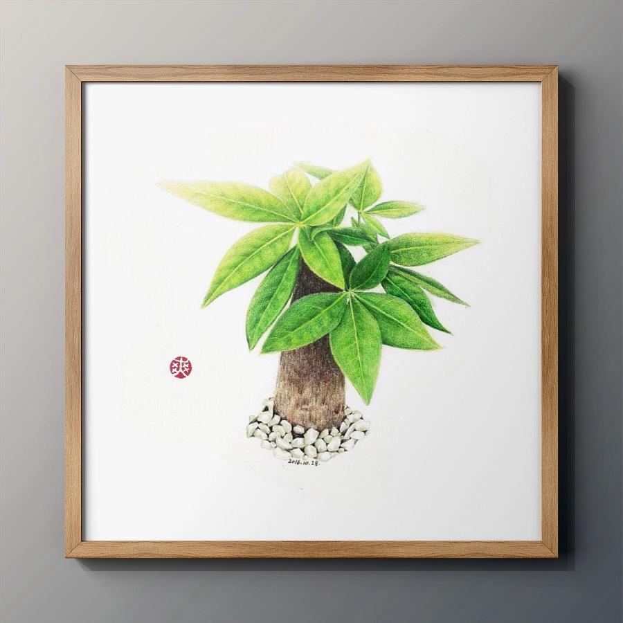 原创作品:彩铅手绘—发财树