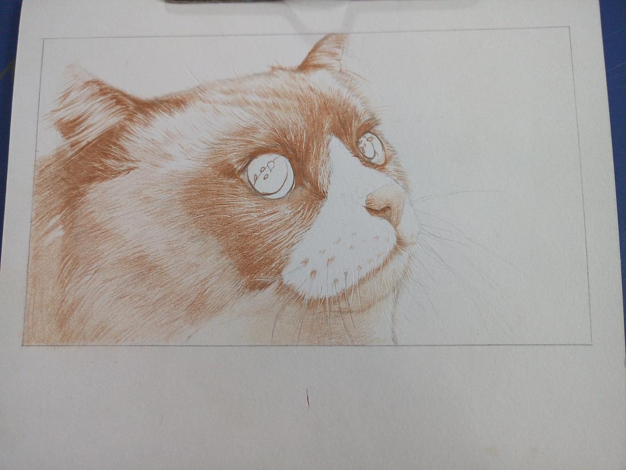 布偶猫(彩铅)