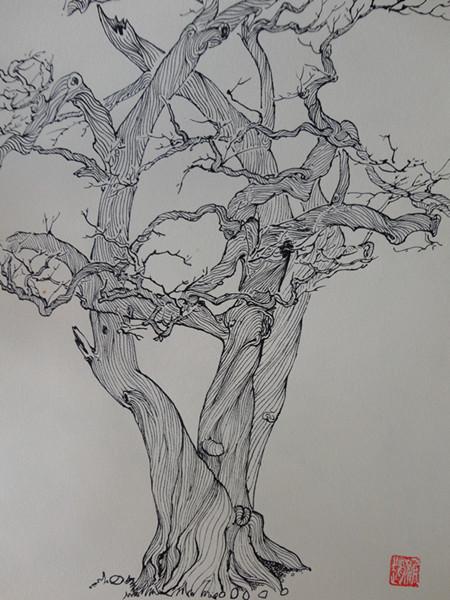手绘山茶树平面图