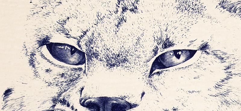 圆珠笔画猫科动物
