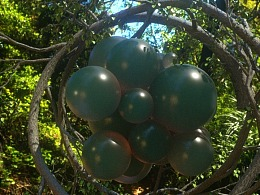OC林中小球