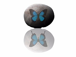 蝴蝶化石 原创 崔阿生