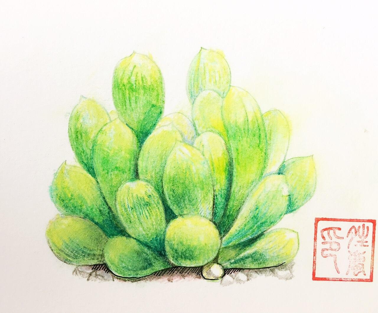 第一次尝试一组彩铅多肉植物图片