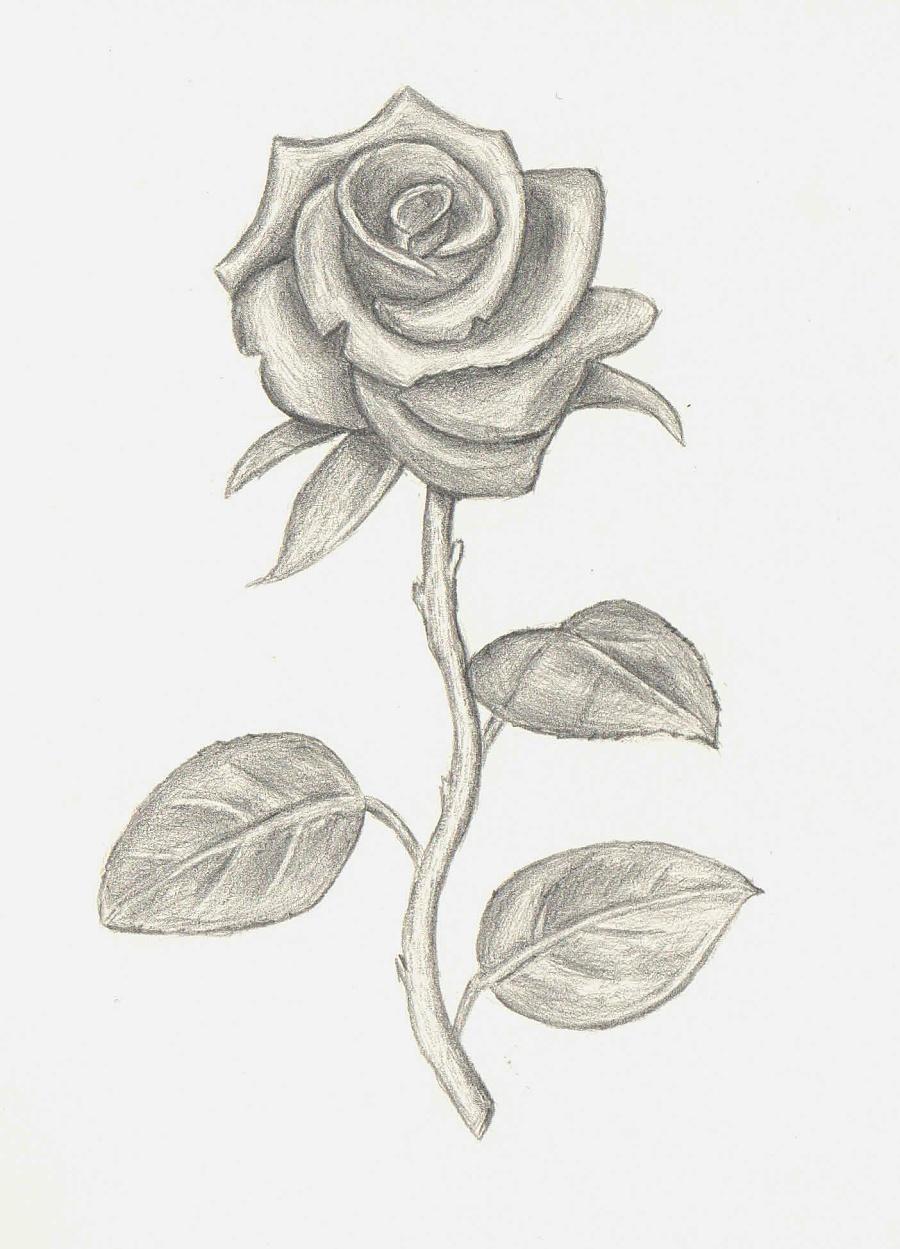 原创作品:手绘/素描 玫瑰花,狗狗