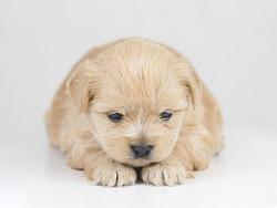 【宠物拍摄】小狗狗