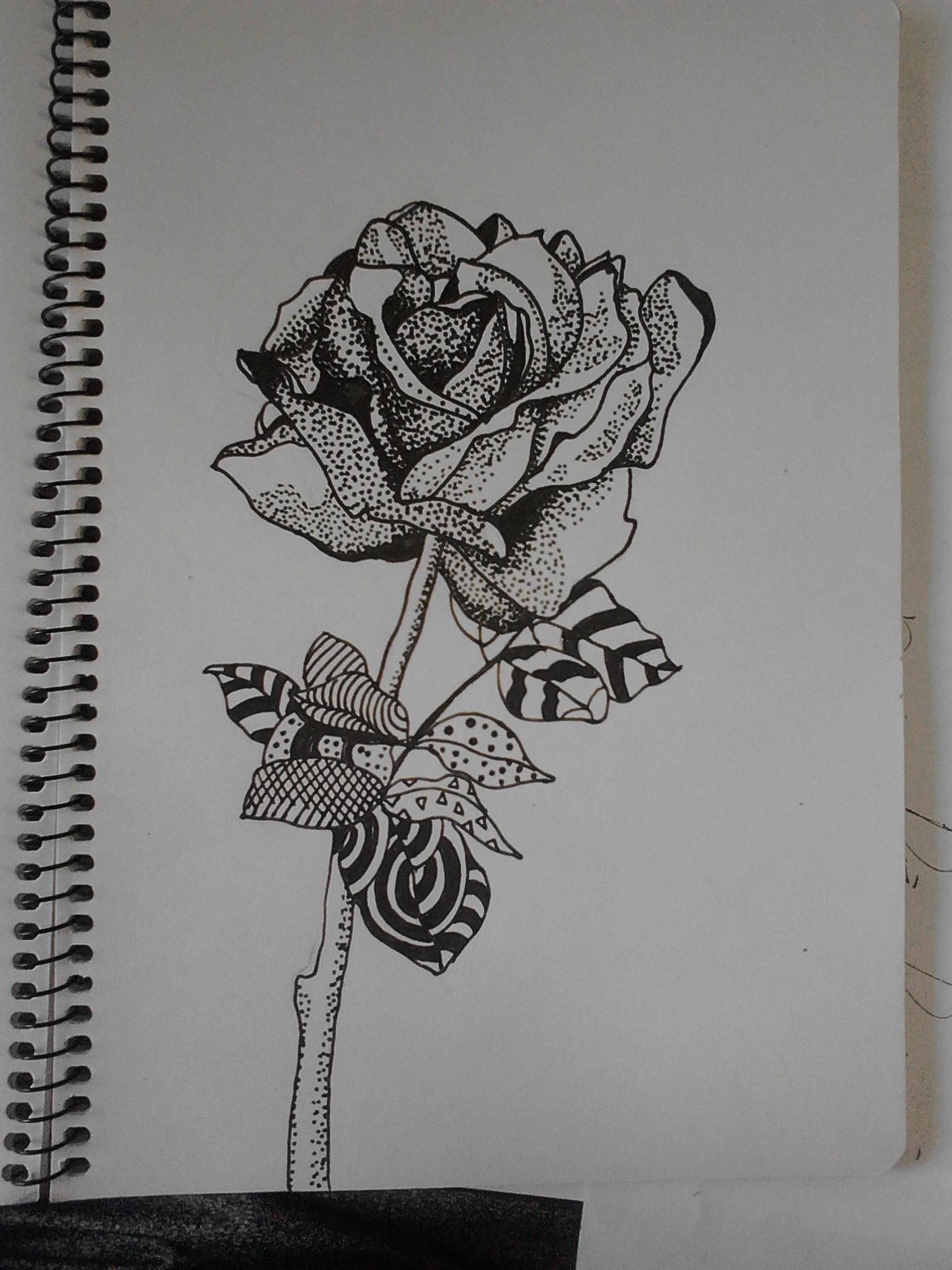 手绘玫瑰|插画|插画习作|站酷豆子 - 原创作品 - 站酷