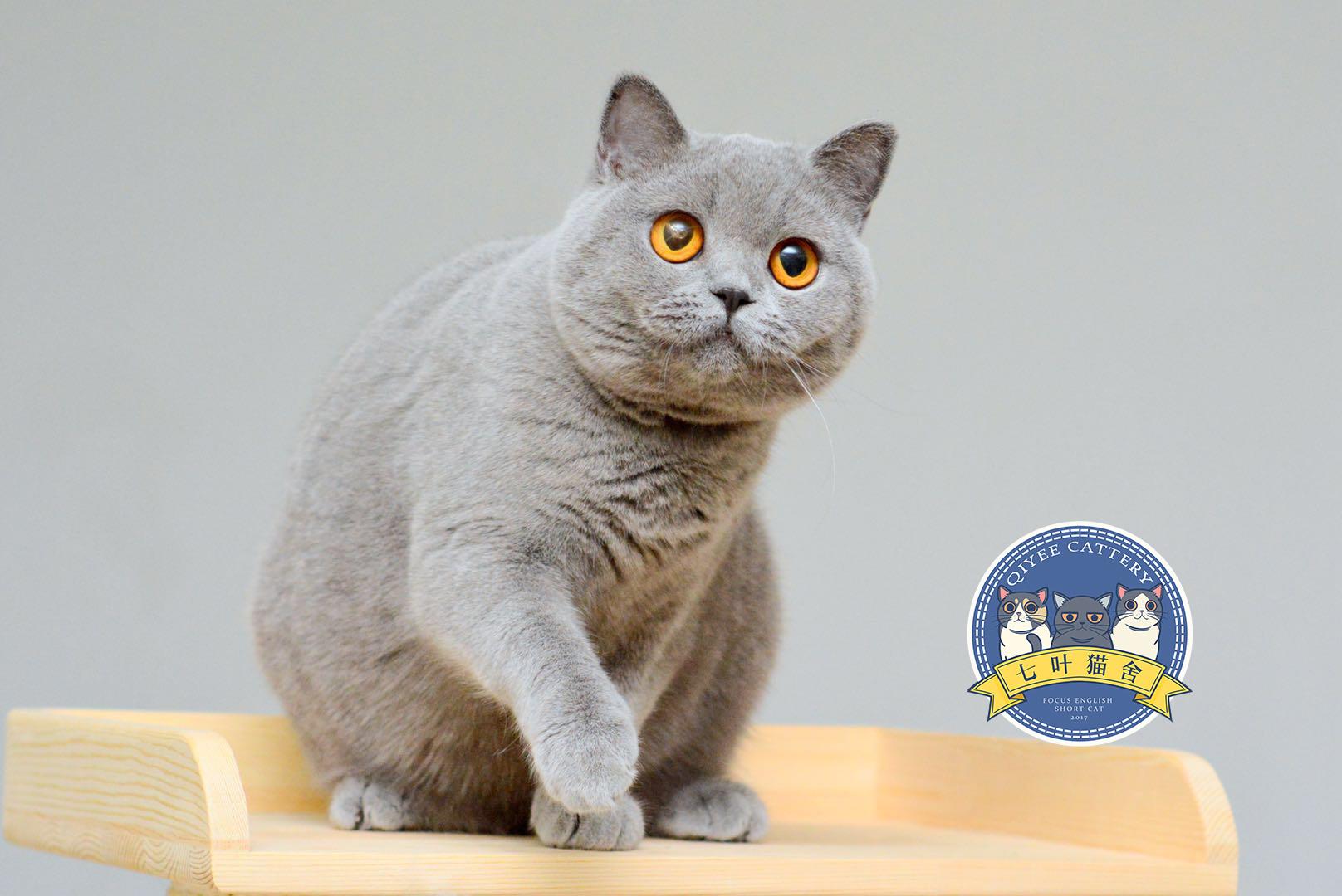 壁纸 动物 猫 猫咪 小猫 桌面 1616_1080