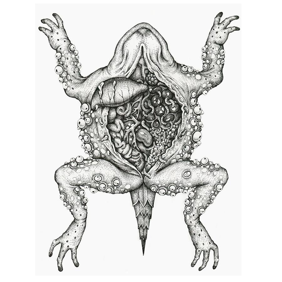 手绘蟾蜍解剖图