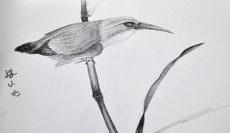鸟 铅笔画 插画