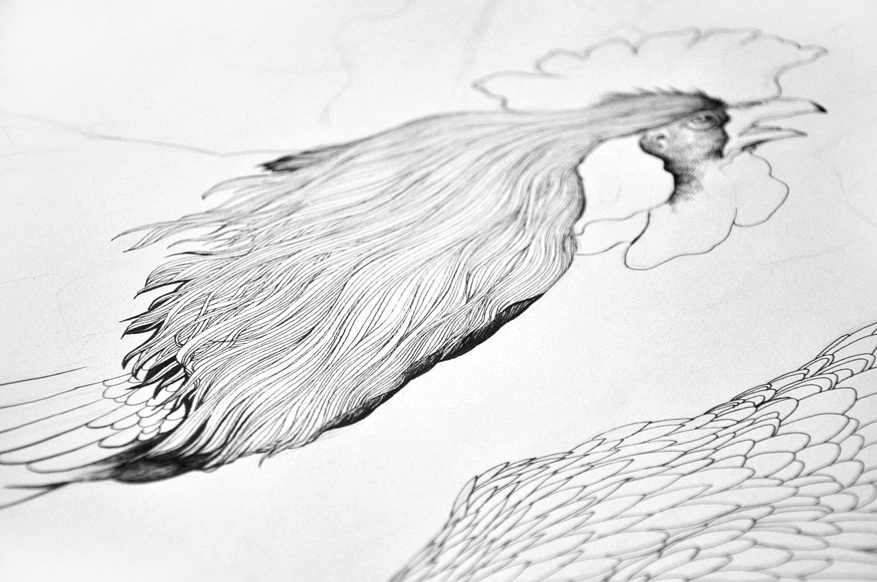 针管笔画 鸡