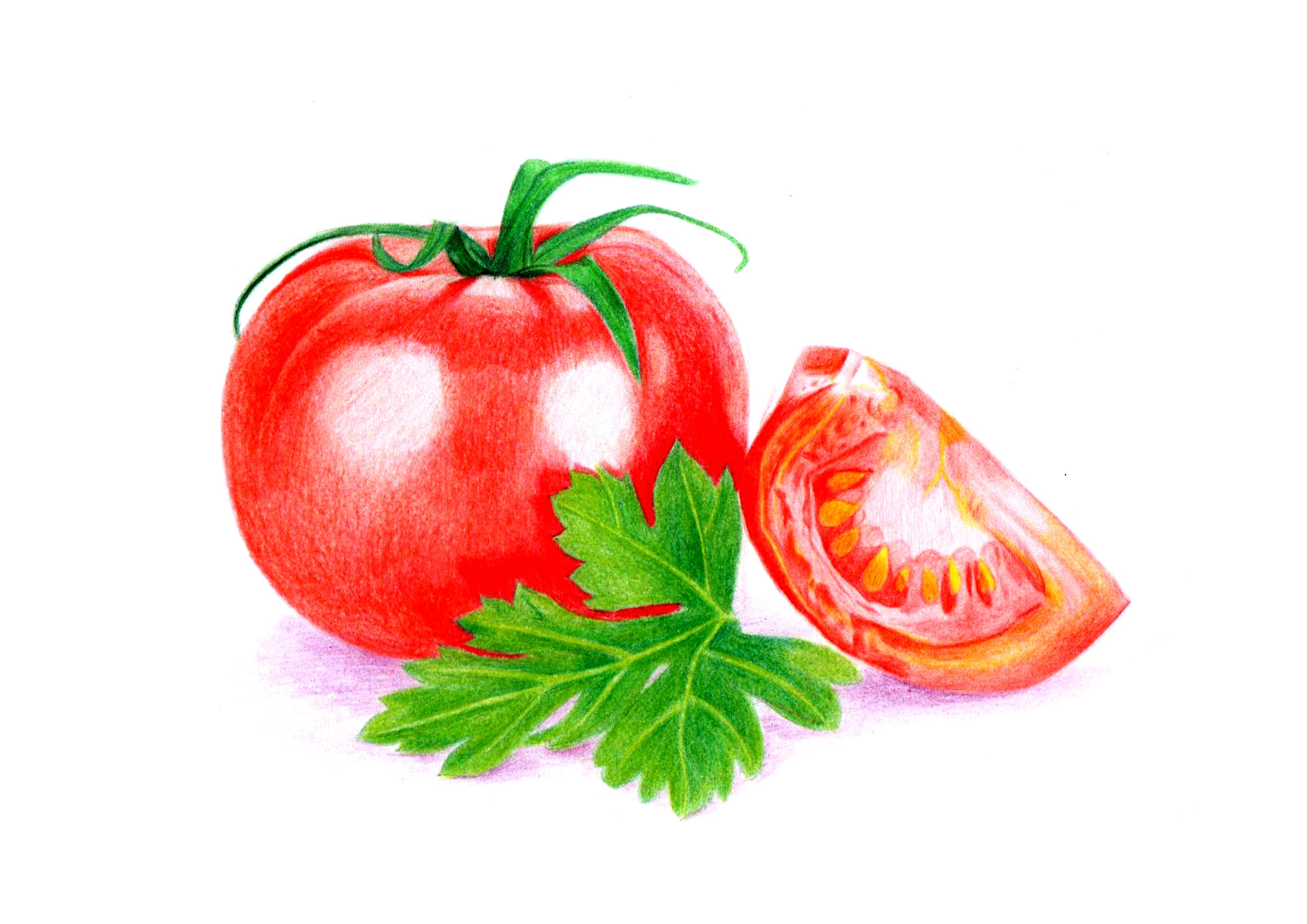 彩铅——水果图片