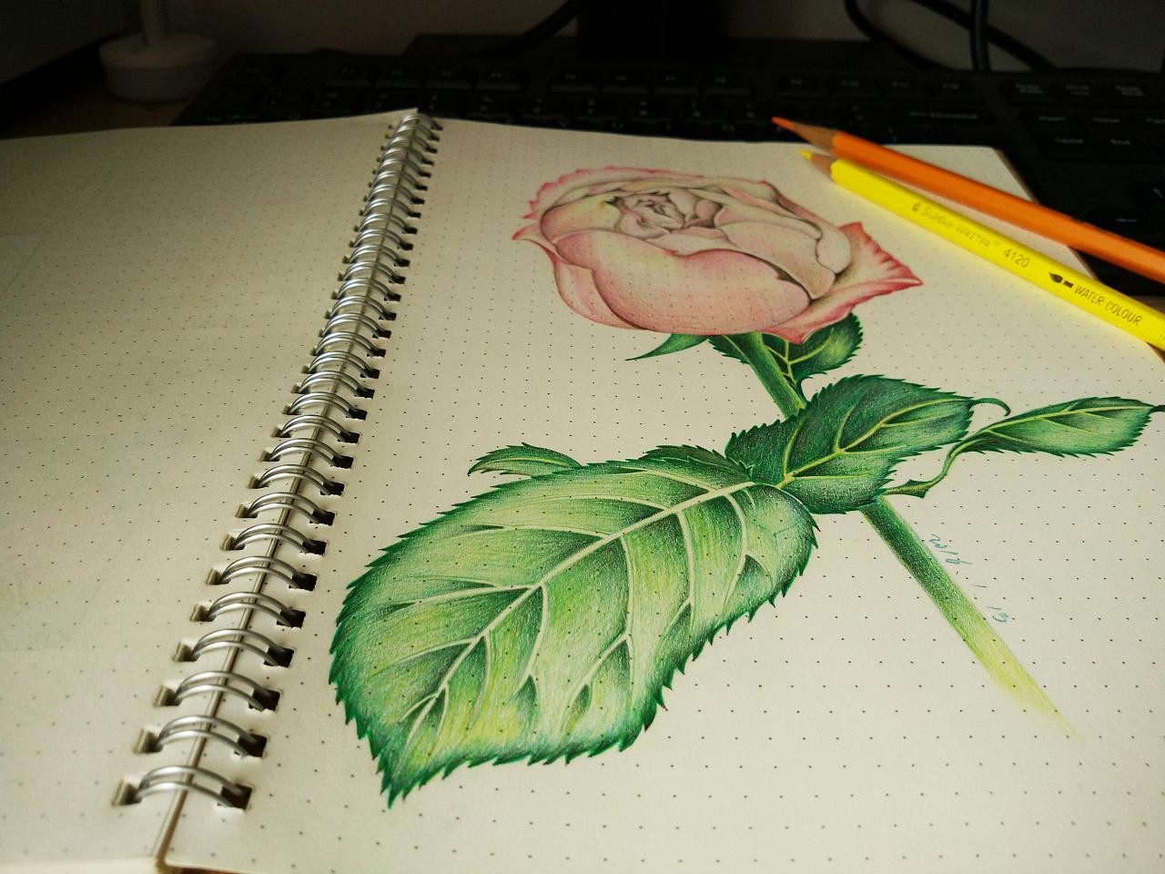 彩铅笔手绘临摹练习-02