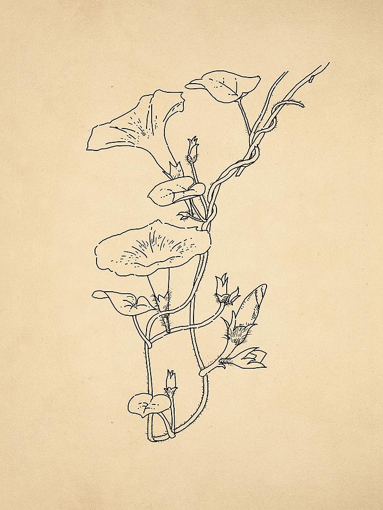 植物手绘练习|纯艺术|其他艺创|n李娜a - 原创作品