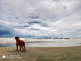 我们家的槟榔在看海