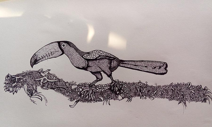壁纸 动物 蜥 蜥蜴 900