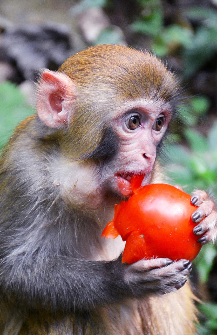 猴子_近战套砍了,都有补偿,猴子为什么没有