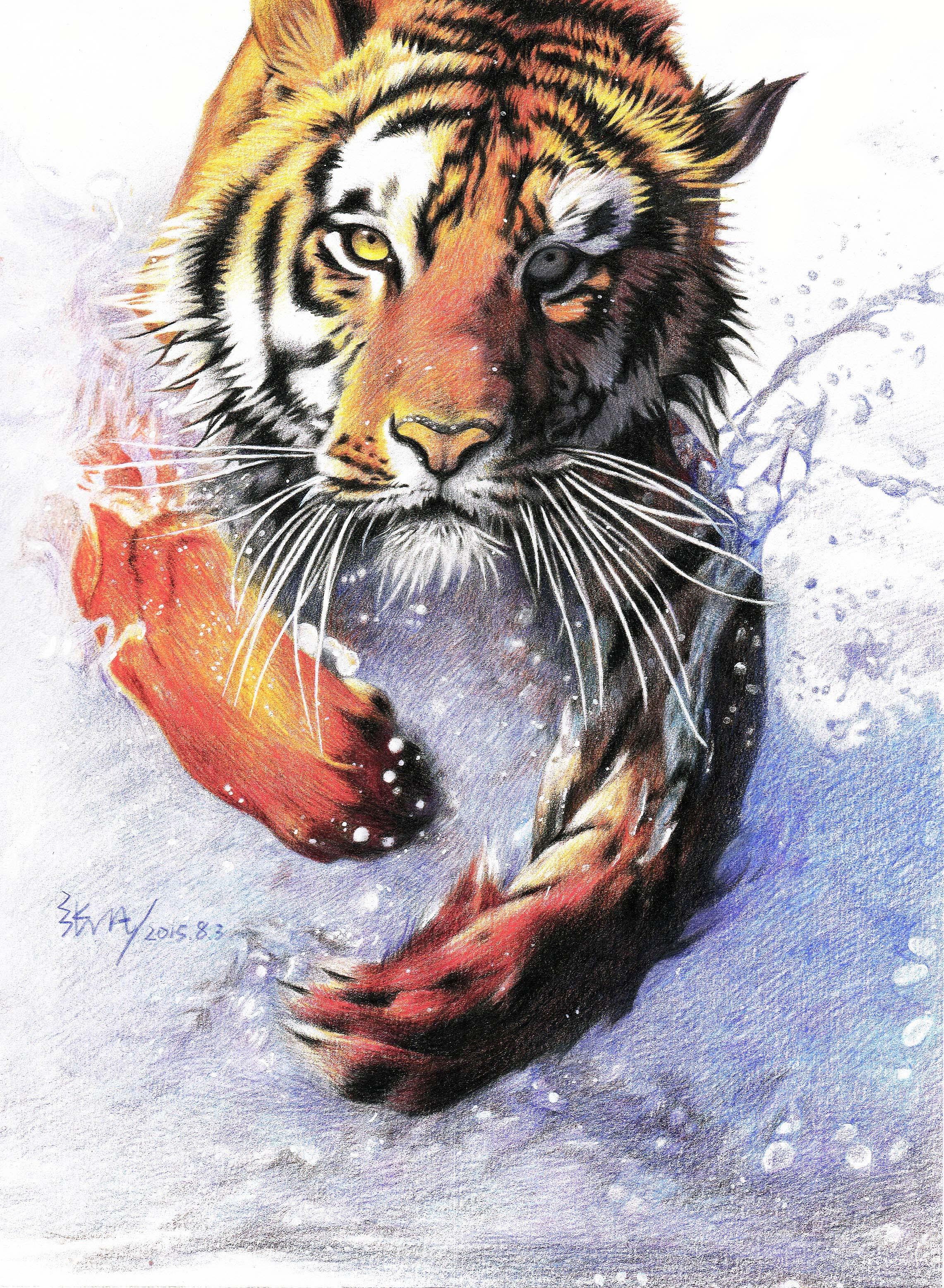 彩铅手绘老虎