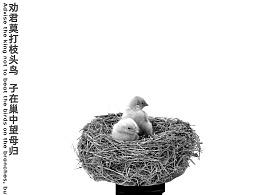 公益海报——保护鸟类