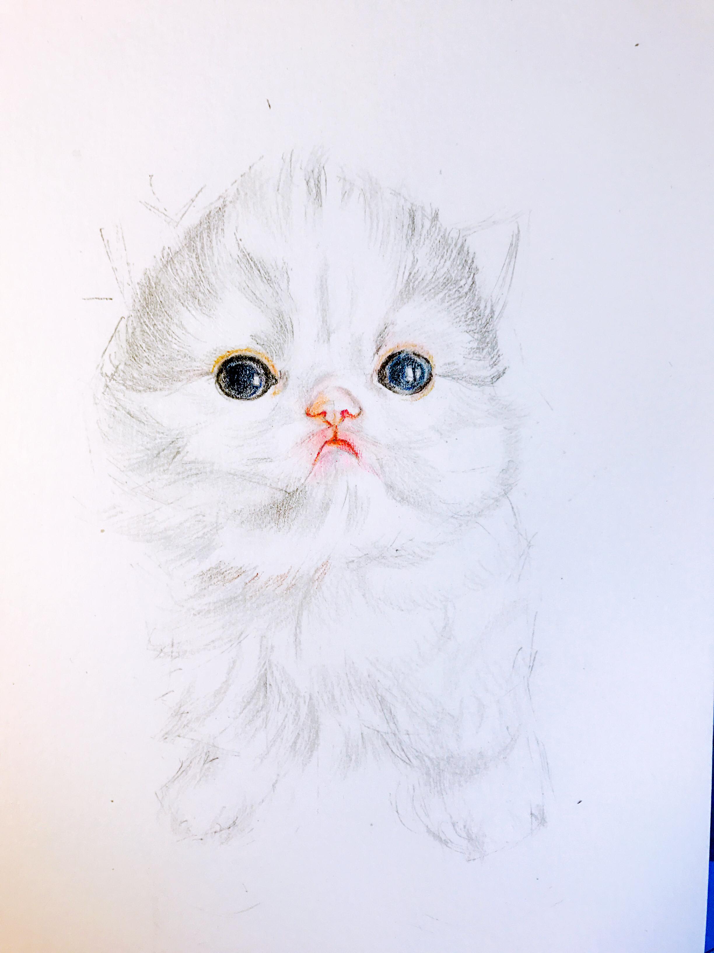 【彩铅萌宠】小奶喵