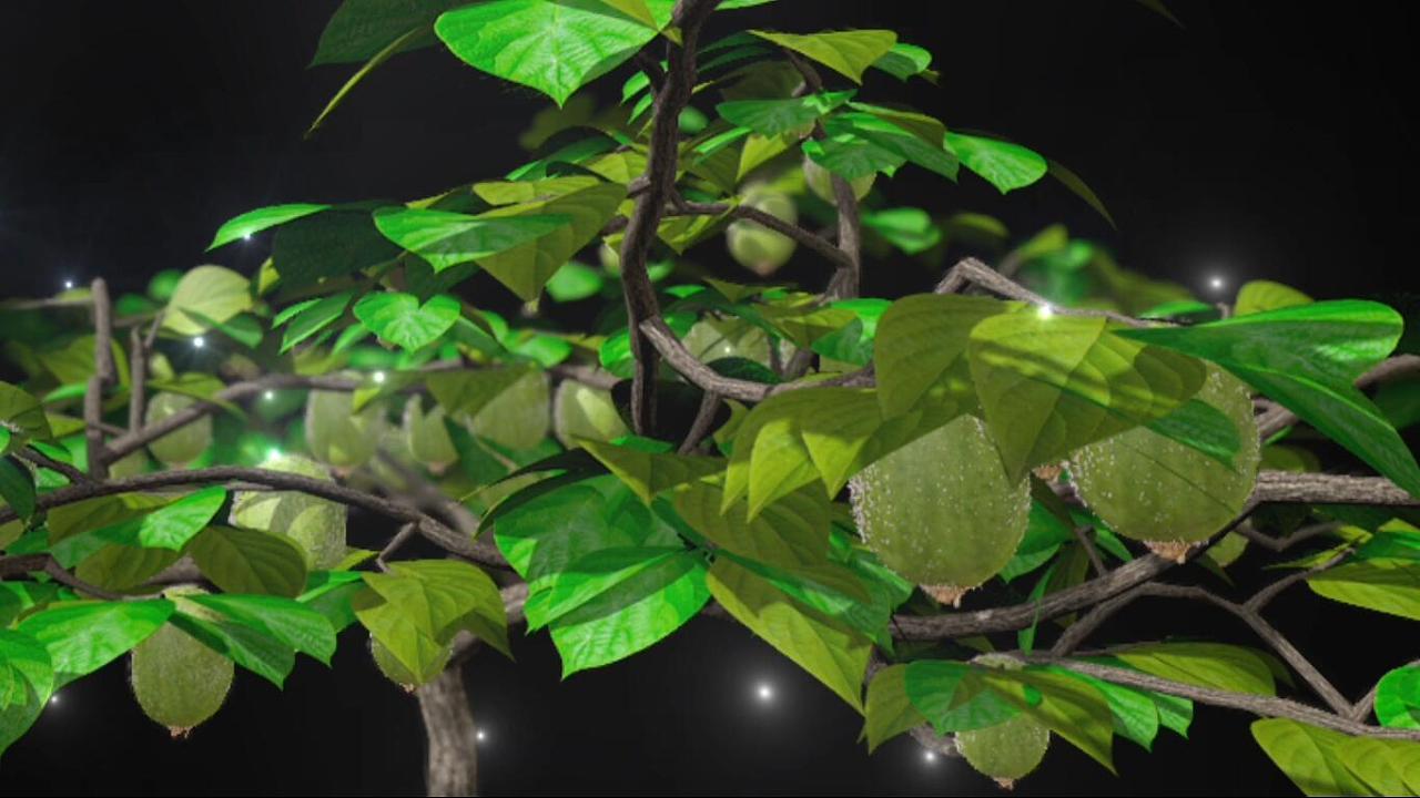【vfx】猕猴桃树生长图片