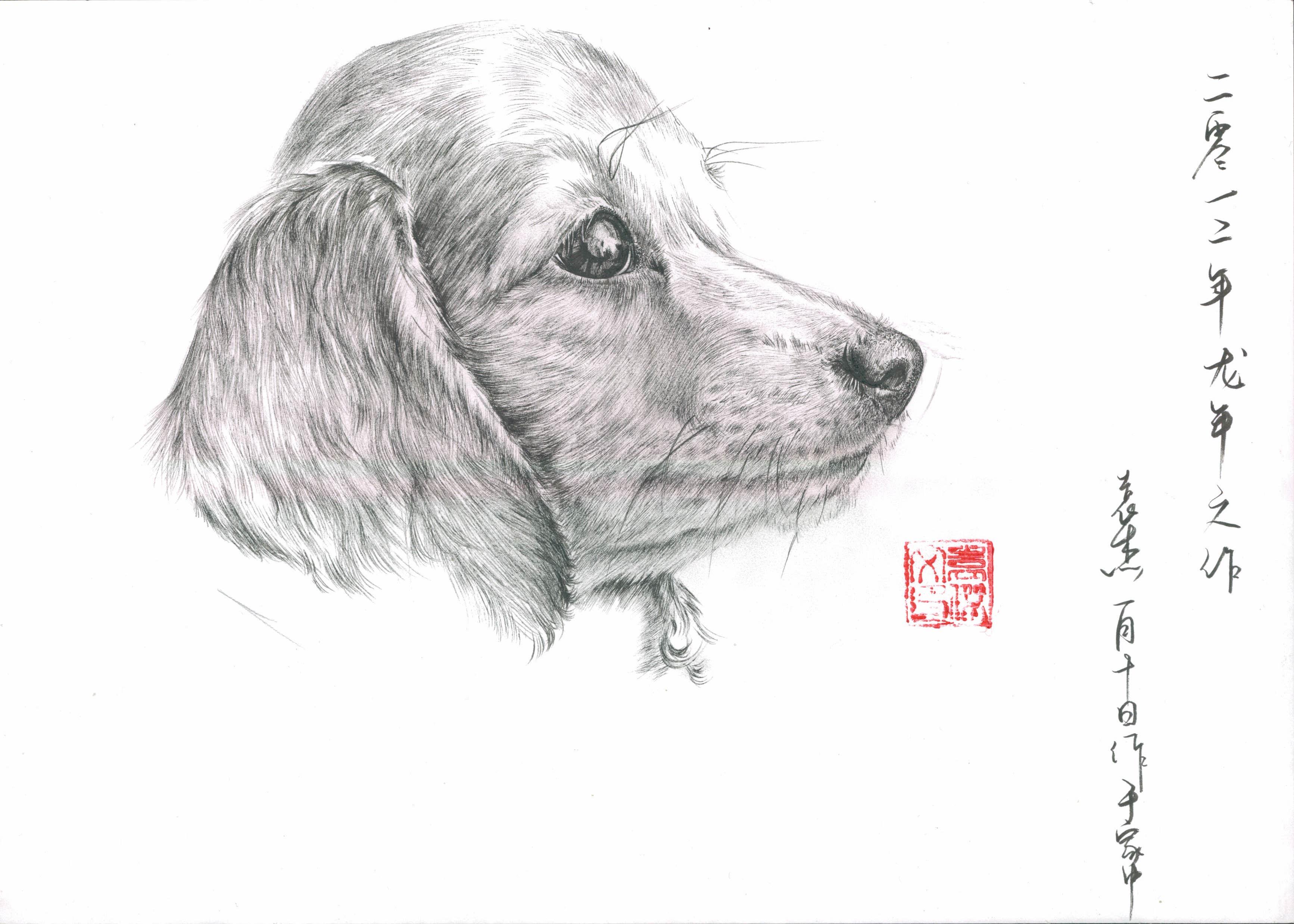 钢笔手绘狗