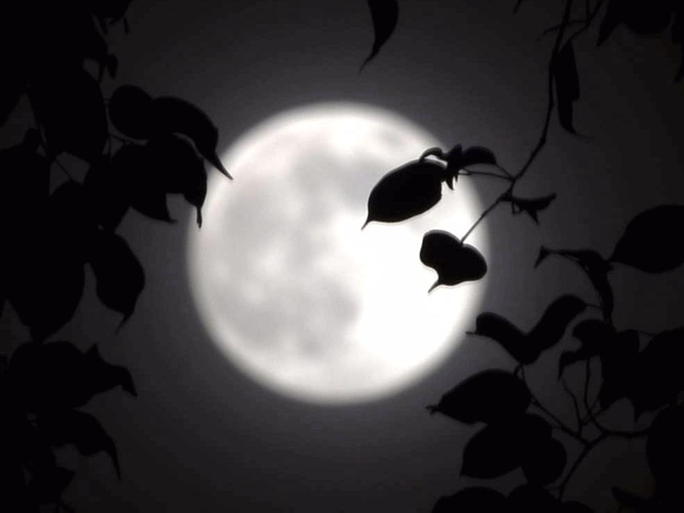 歌曲《望月》么健歌谱