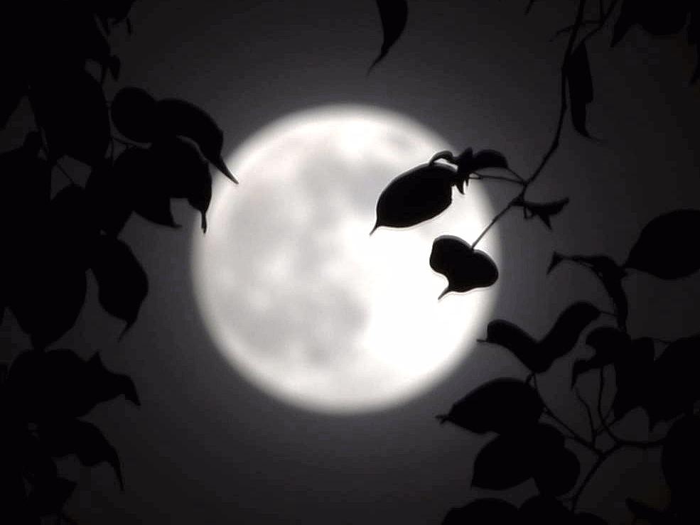 詩人望月背影簡筆畫