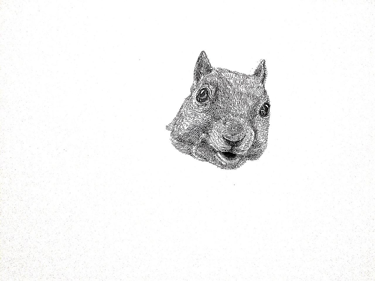 李万海钢笔手绘动物
