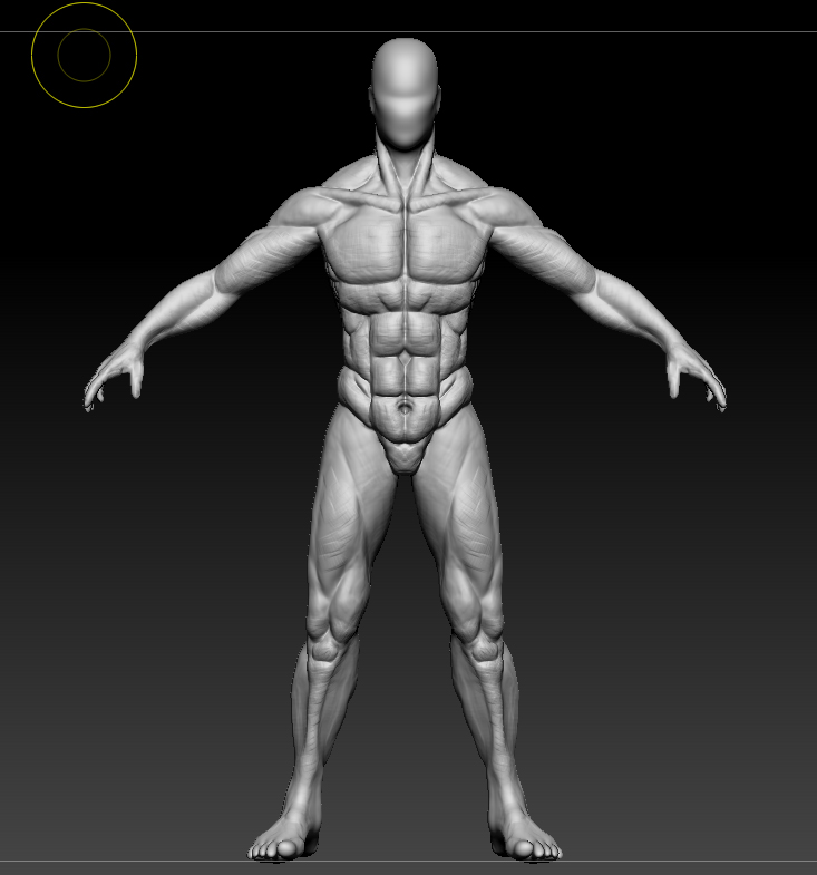亚洲人体�9��yf�x�_原创作品:人体肌肉比例