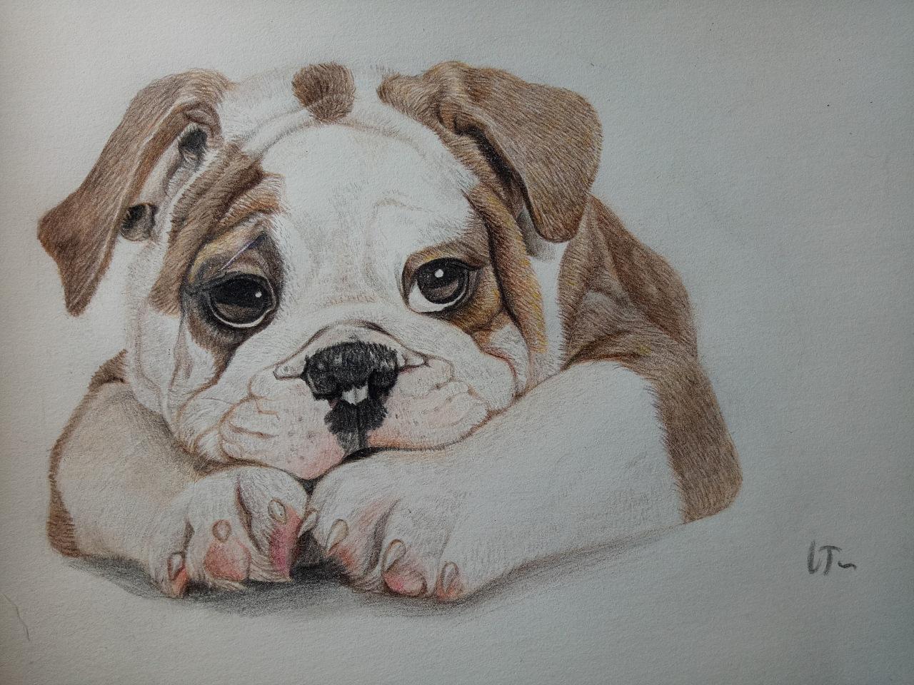 手绘彩铅沙皮狗