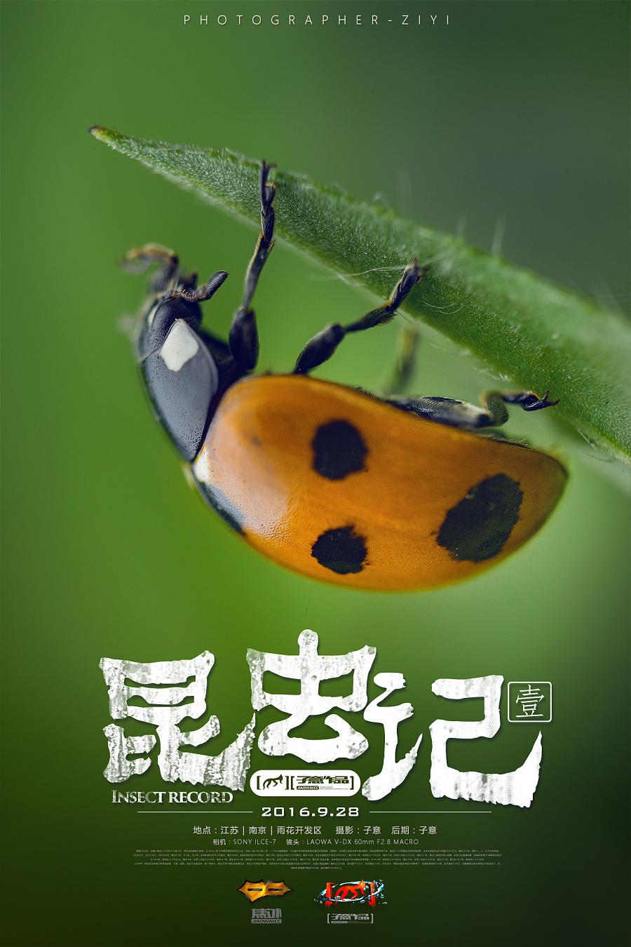 《昆虫记.壹》|生态|摄影|摄影师子意