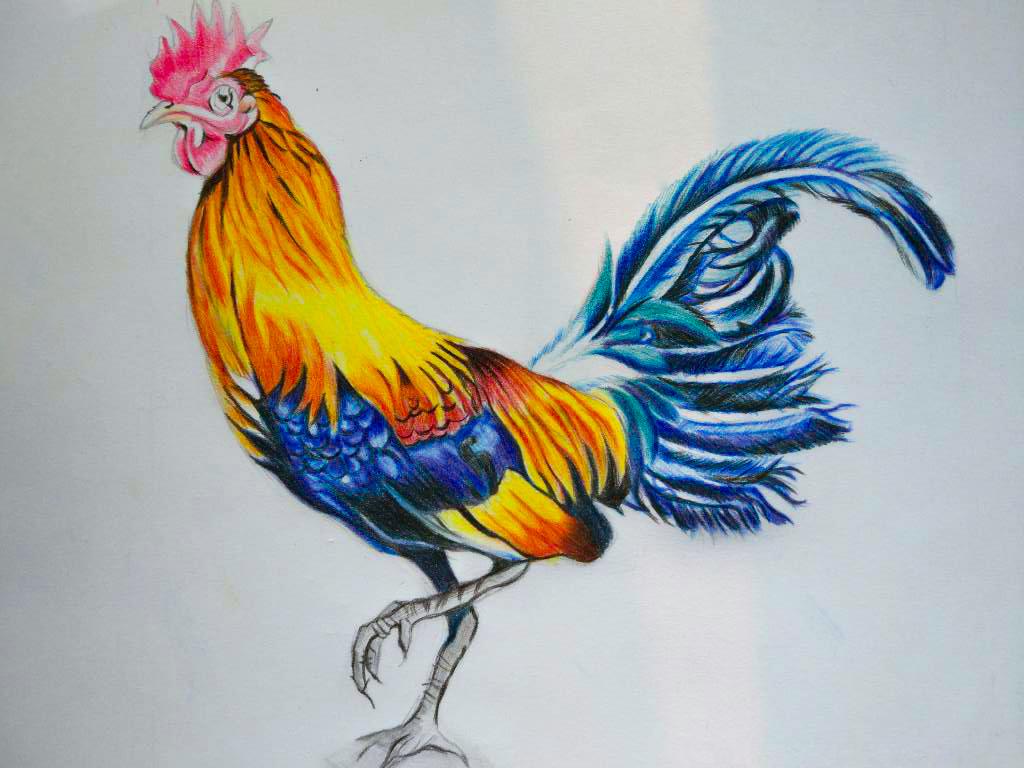动物彩铅教程图解