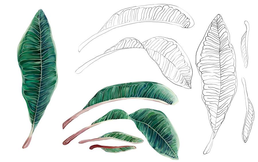可浓 植物插画手绘|商业插画|插画|猪血糕 - 原创设计