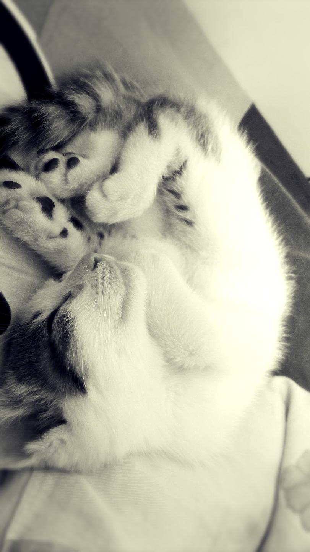 晒猫star 宠物/动物 摄影 danica - 原创设计作品