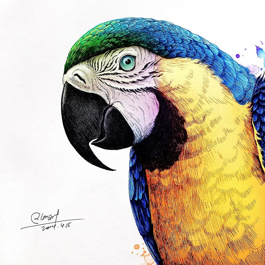 鸡吧wang_rlon wang 动物插画欣赏