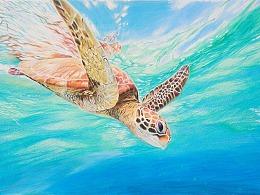 彩铅画《海龟》